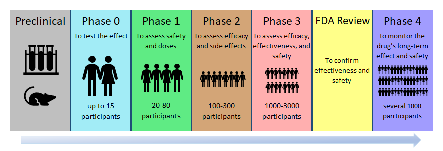 Phases of clinical trials: preclinical, phase 0, phase 1, phase 2, phase 3, FDA review, phase 4. FDA approved cannabis products must go through this process.