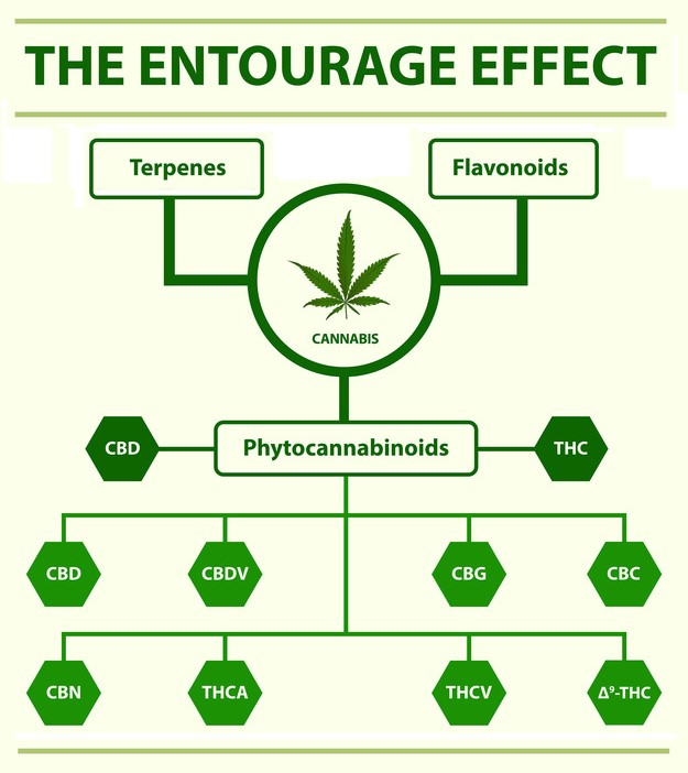 """The """"entourage effect"""" is the complex synergistic relationship between the compounds (cannabinoids, terpenes, and flavonoids) of the cannabis plant."""